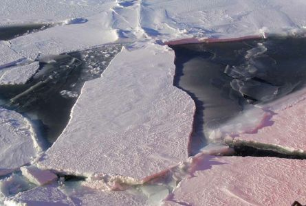 Sea ice floes_blog